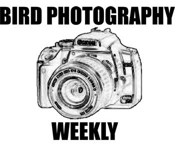 Bird Photography Weekly #22