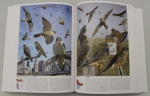 Crossley ID Guide Eastern Birds - Falcons