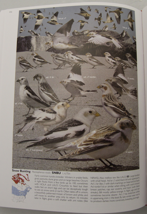 Crossley ID Guide Eastern Birds - Snow Buntings