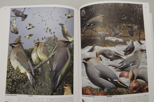 Crossley ID Guide Eastern Birds - Waxwings