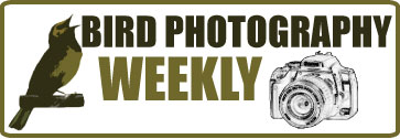 Visit Bird Photography Weekly