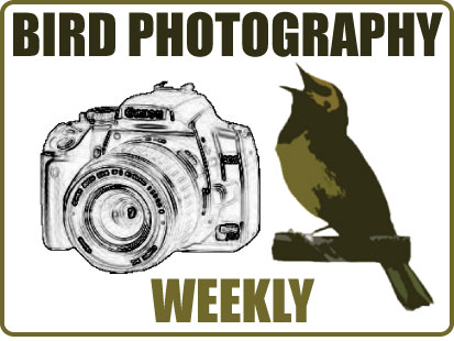 Bird Photography Weekly #74