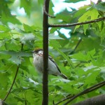 Birding Videos