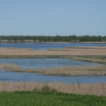 Horicon Marsh and International Migratory Bird Day