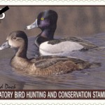 Bird Conservation Stamp