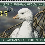 Duck Stamps – More Birds For Your Buck