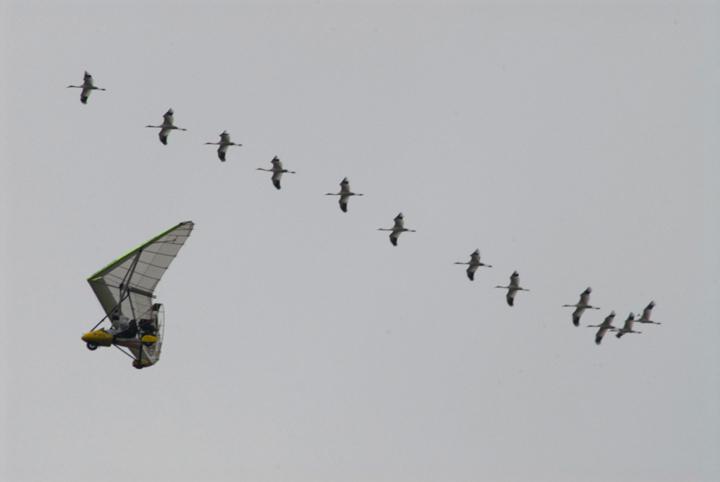 Whooping Cranes Ultralight
