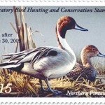 Migratory Bird Hunting and Conservation Stamp on Sale Now!