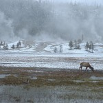 Phriday Photo – Snowy Yellowstone