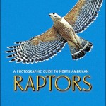 Review of A Photographic Guide to North American Raptors