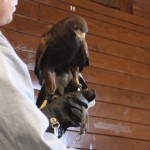 World Bird Sanctuary Live Raptor Show – Starved Rock State Park