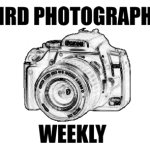 Bird Photography Weekly #1