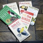 New Birder Experience – What is the Best Field Guide to Birds?