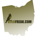 Birding Ohio – A Tale of Two Mimics
