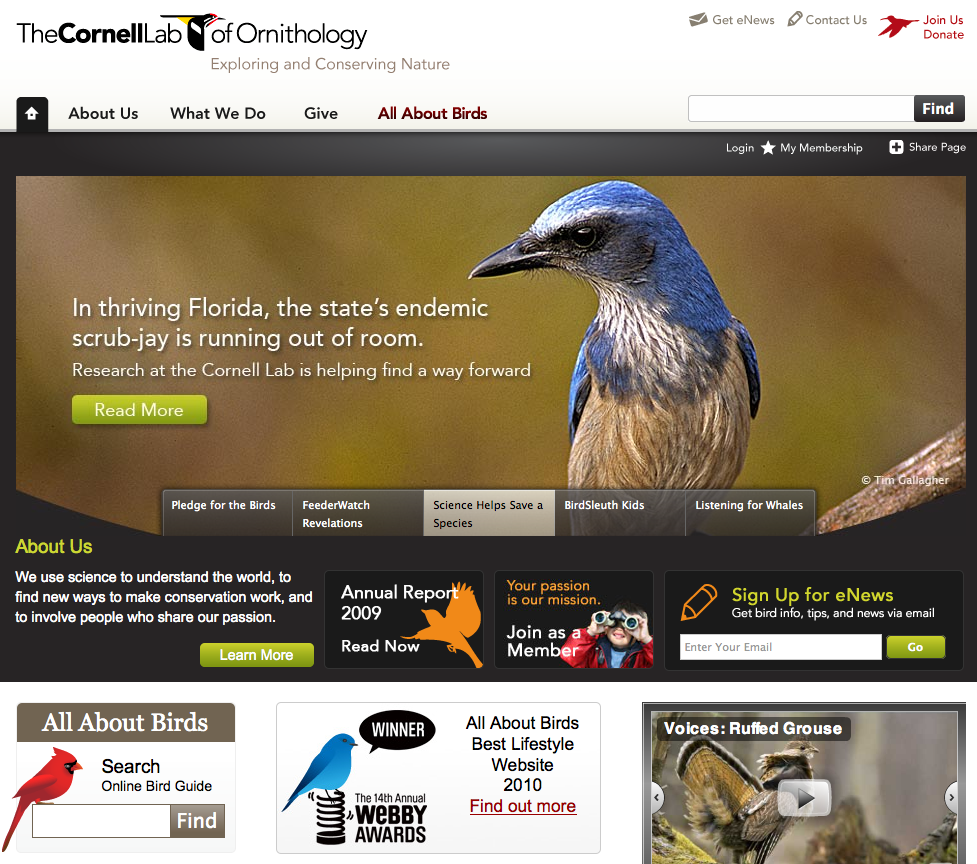 Website Update Review – Cornell Lab of Ornithology