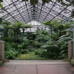 Winter Visit to the Garfield Park Conservatory – Chicago