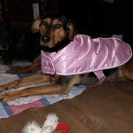 Phriday Photo – Bella Nova Scotia's New Walking Jacket