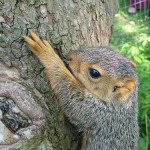 Phriday Photo – Baby Squirrel
