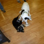 Puppies and Dog Training