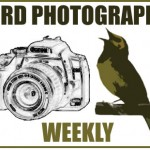 Bird Photography Weekly #45