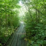 Ohio Young Birders Field Trip – Cedar Bog State Nature Preserve