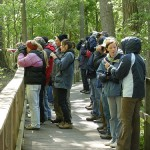 Biggest Week in American Birding – A Different Kind of Crowd