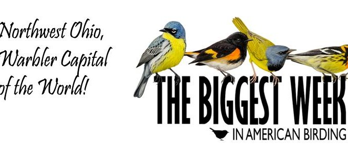 Biggest Week in American Birding – Celebrating Birds and Conservation
