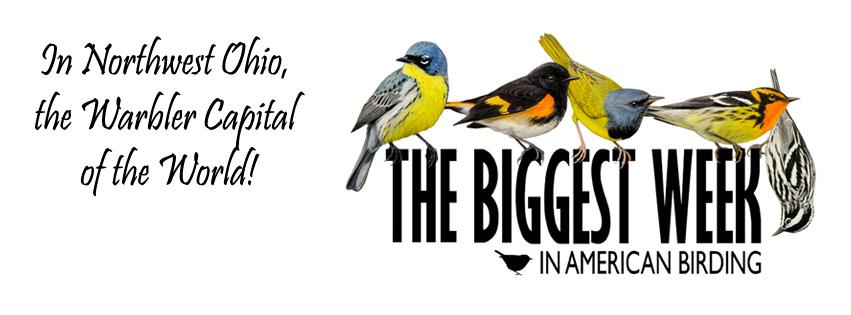 Biggest Week in American Birding