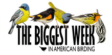 Biggest Week in American Birding Logo