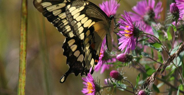Why Use Native Plants for Birdscaping