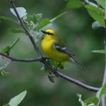 Birdscaping – Landscaping for Birds