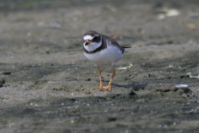 Bird Identification Help
