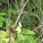 17-year Cicadas are for the Birds!